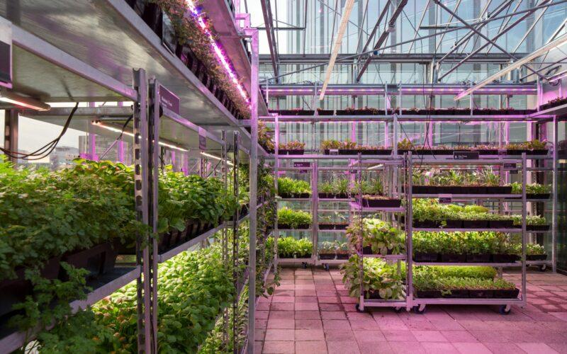 the-greenhouse-utrecht-14
