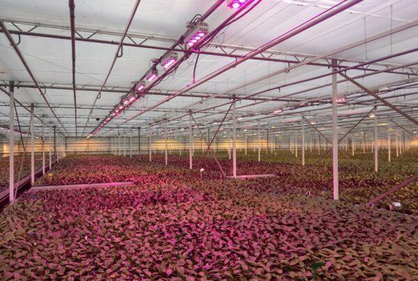 RA AirCooled greenhouse
