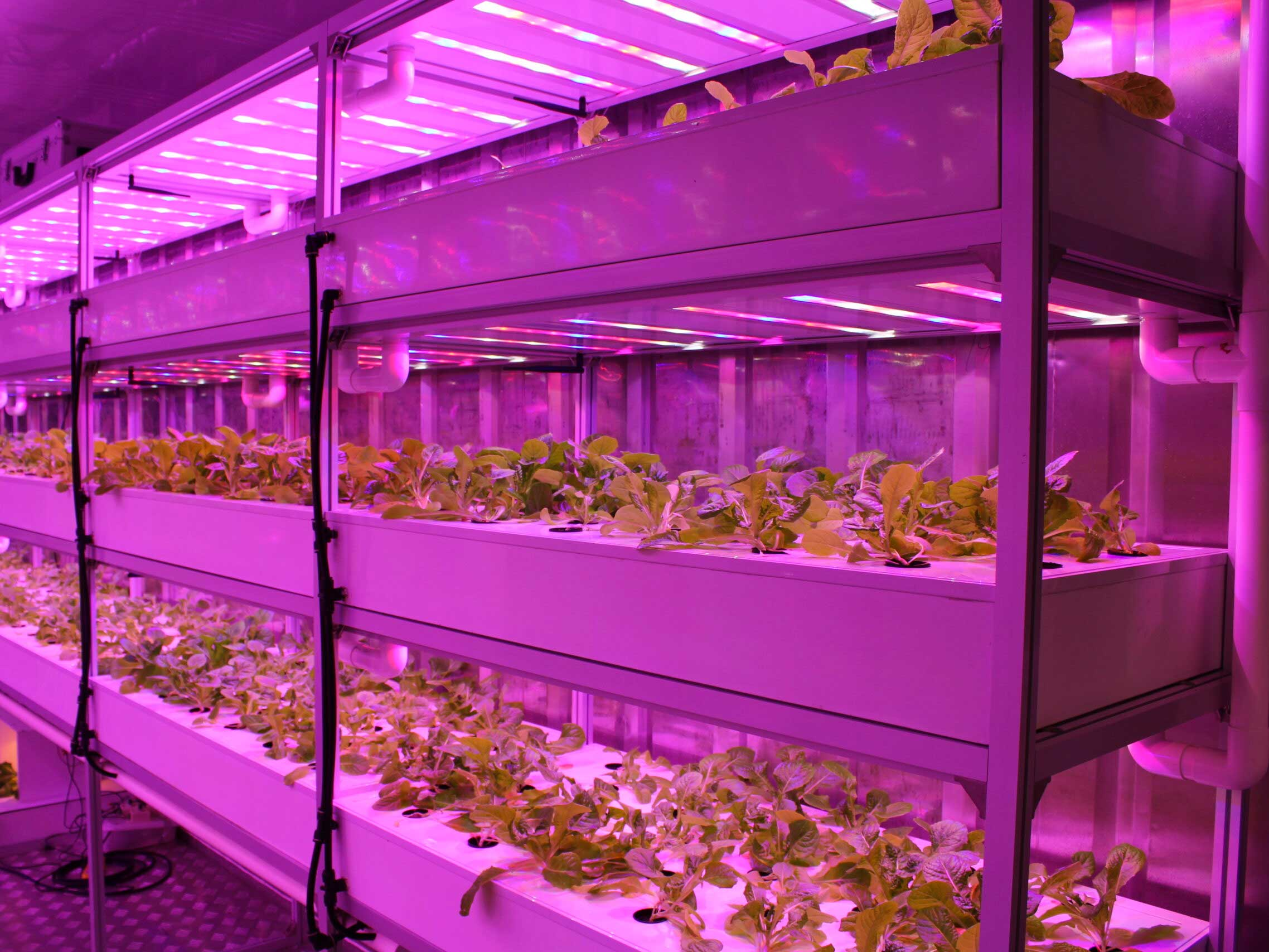 Lettuce Plant Factory System