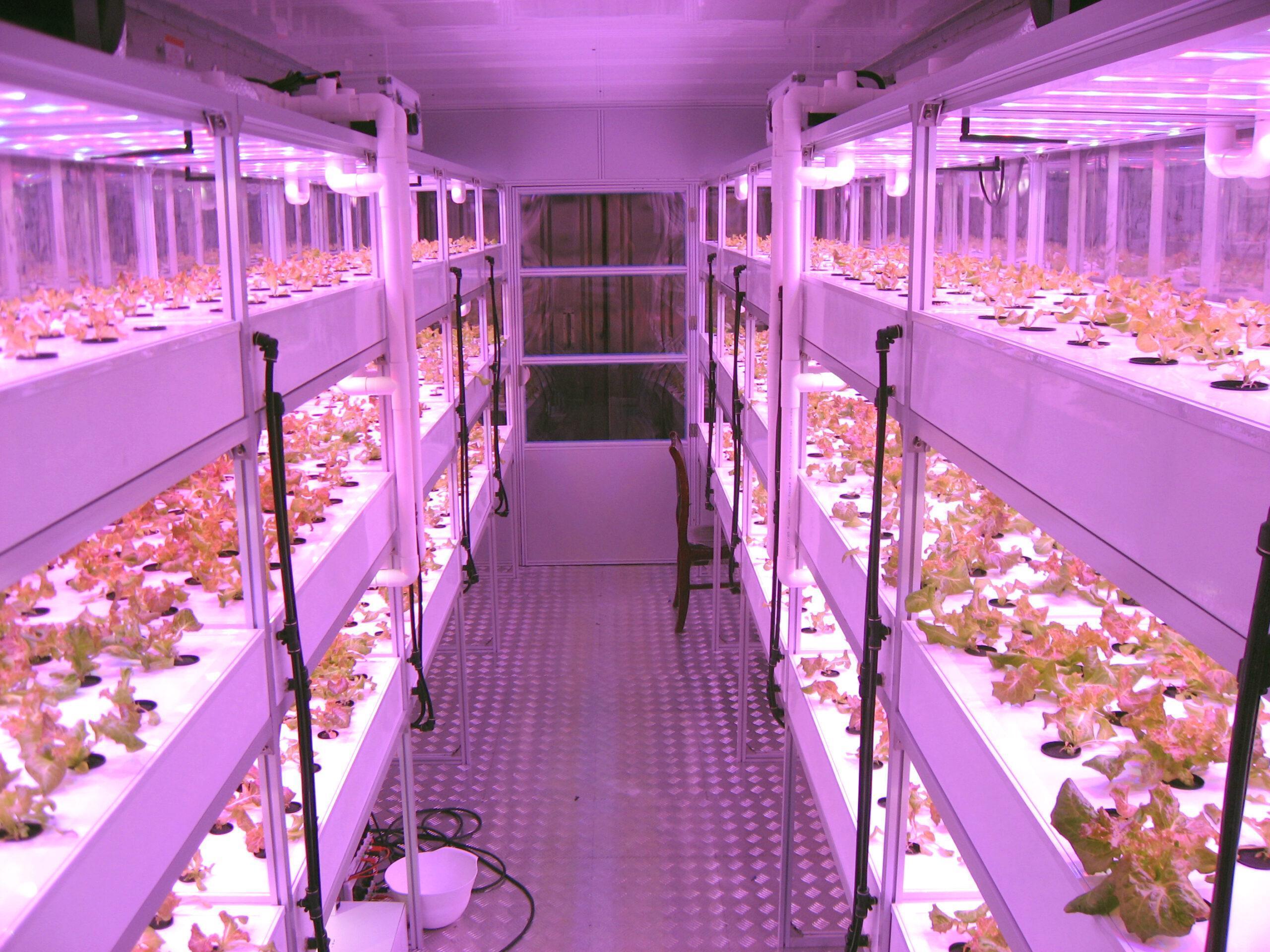 Lettuce Plant Factory