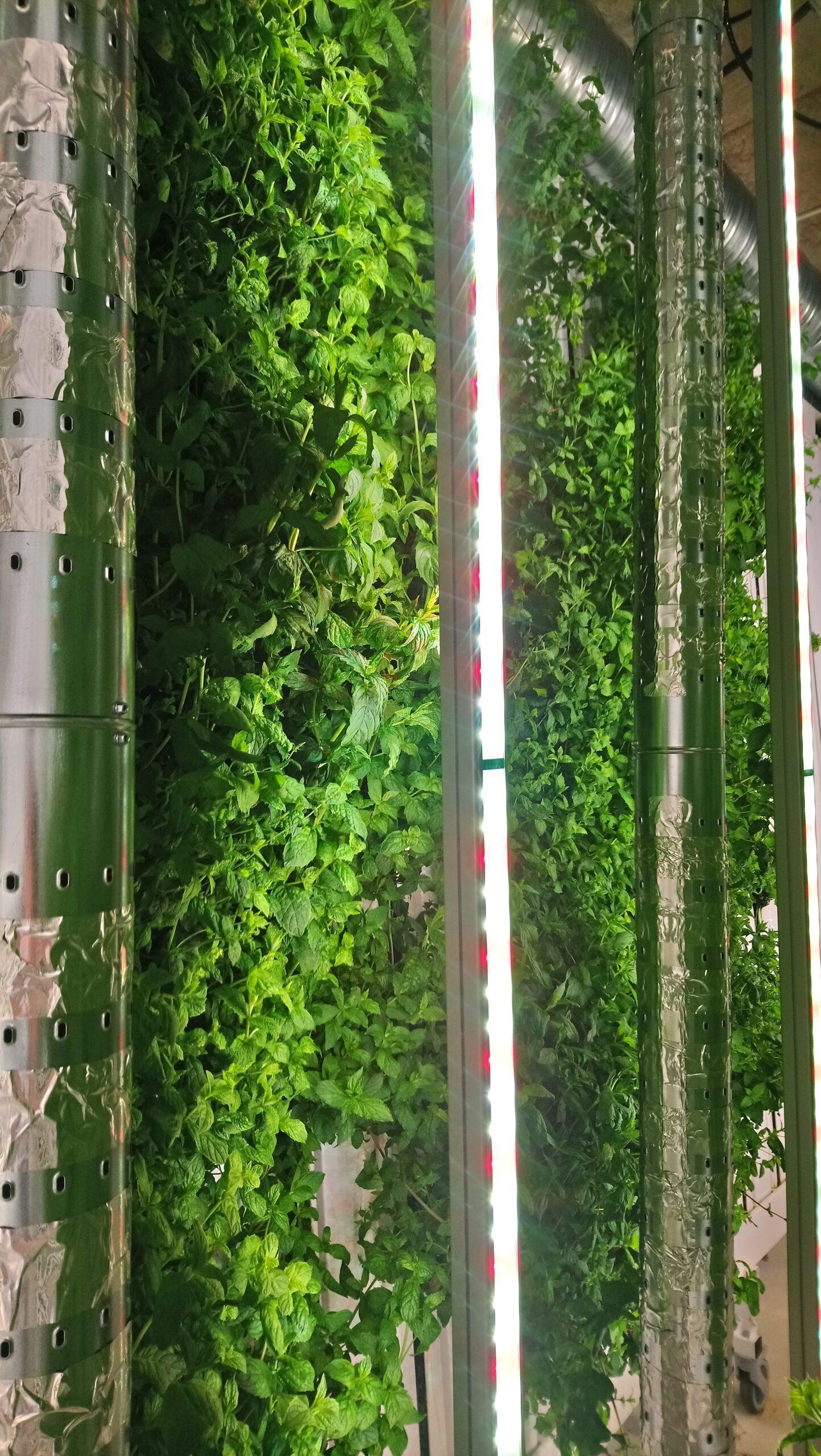 DRBC-II vertical farm